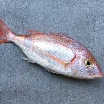 Madeinfrance-poiscaille-poisson