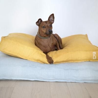 philibert-chien-madeinfrance-chien