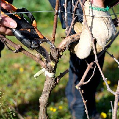 clostroteligotte-vin-madeinfrance