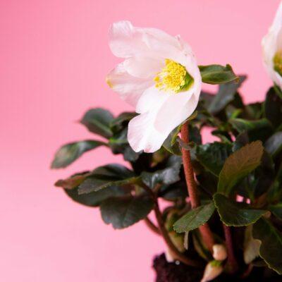 fleurs-madeinfrance-labutineuse